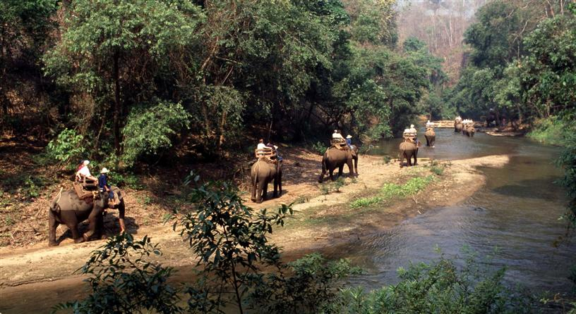 gallery-elephant-ride-chiang-mai-1