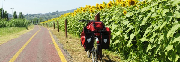Lane for bicycles and sunflowers in Tuscany near Poggio a Caiano at summer